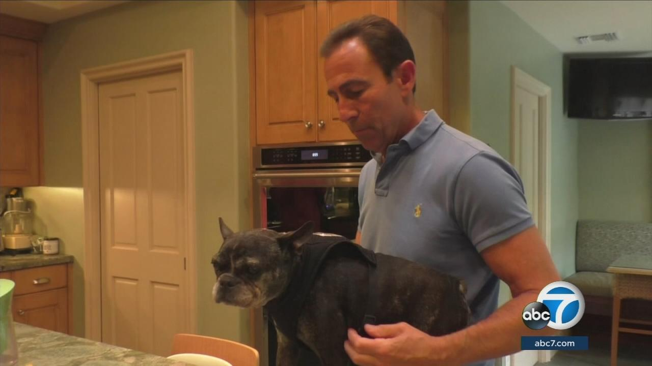 Dr. Jeff Werber gives advice on how to take care of your pet during a loud Independence Day weekend.