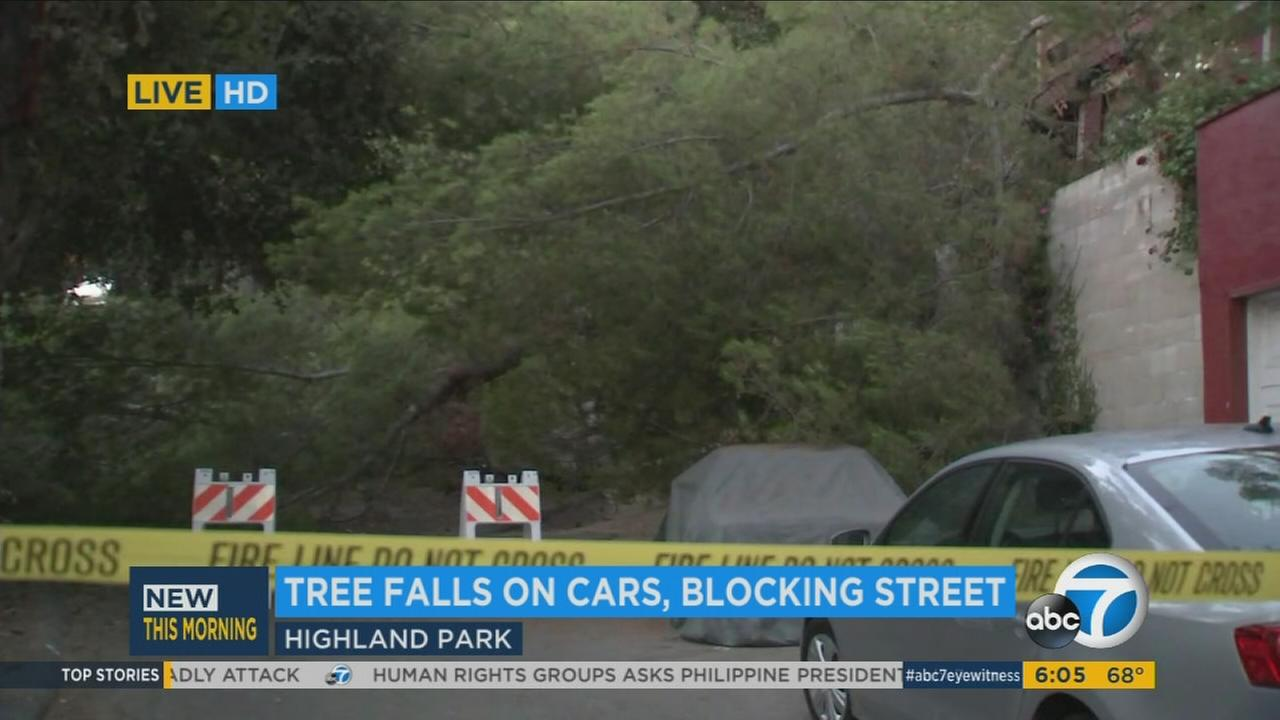 A large pine tree covers a neighborhood street in Highland Park on Wednesday, July 26, 2017.
