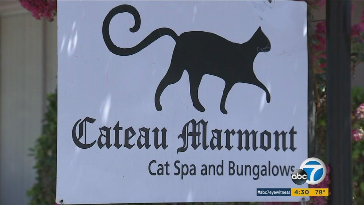 A cat-centric business is in hot water with the Chateau Marmont hotel in West Hollywood for having similar names.