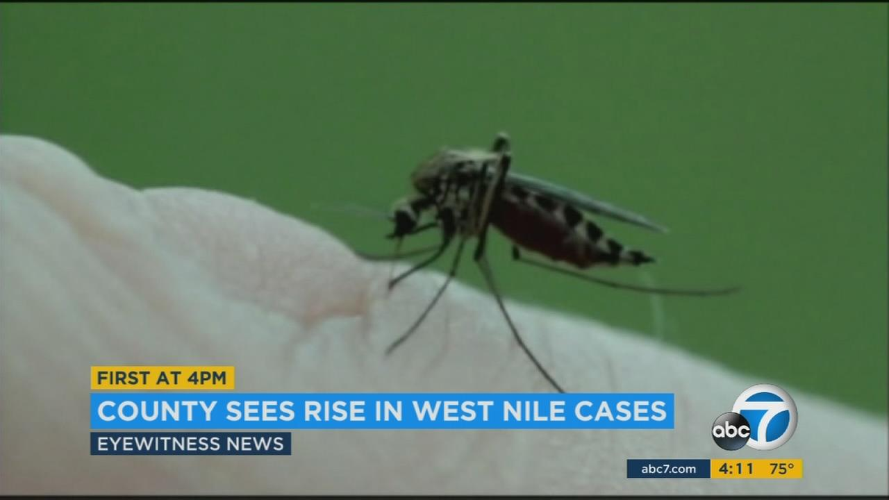 Los Angeles County is seeing a rise in West Nile virus cases, and many of the people infected live in the San Fernando Valley.