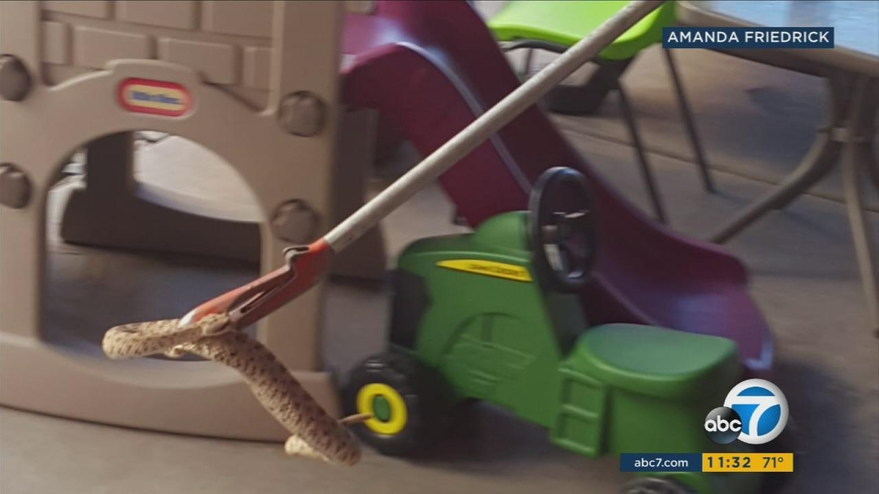 A Kern County family is warning people about rattlesnakes after more than a dozen of them were found in their childrens playhouse in the back yard.