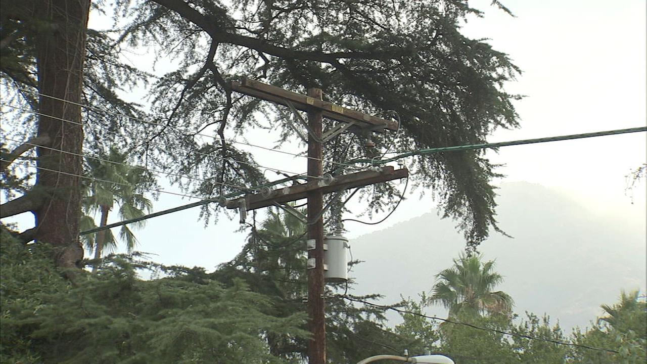 One of several 100-year-old trees in Altadena that residents on Thursday, Aug. 24, 2017, are trying to save.