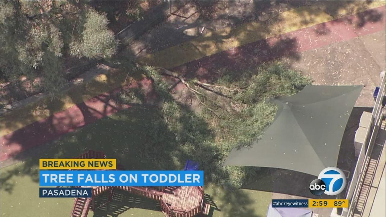 A 2-year-old girl was critically injured after a tree fell at a childrens center in Pasadena on Tuesday.