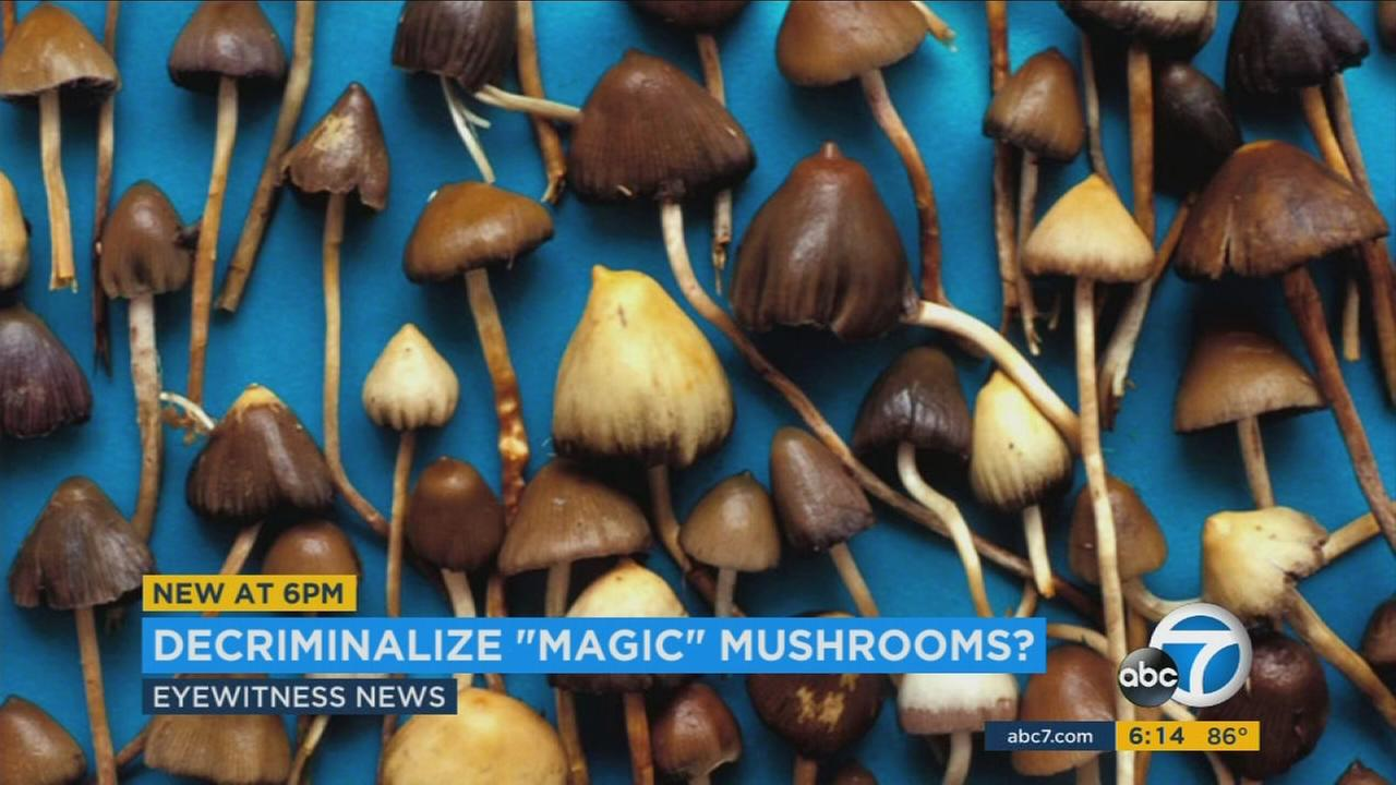 California could become the first state to legalize magic mushrooms if a ballot initiative becomes law.
