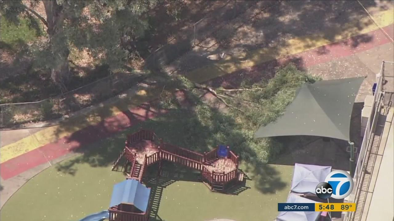 The tree limb that fell on a 2-year-old girl in Pasadena Tuesday came down right next to the day care center where more than a dozen young kids were playing.