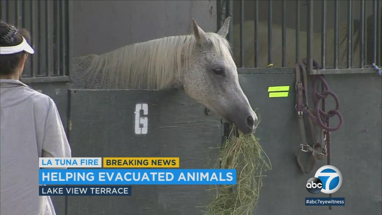 A horse eating hay is shown at the Hansen Dam Equestrian Center.