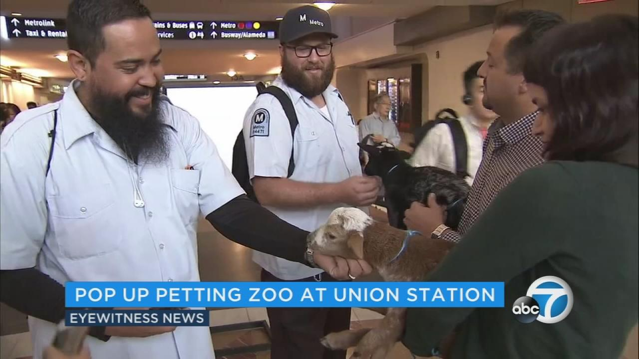 The LA County Fair brought its petting zoo to commuters at Union Station.