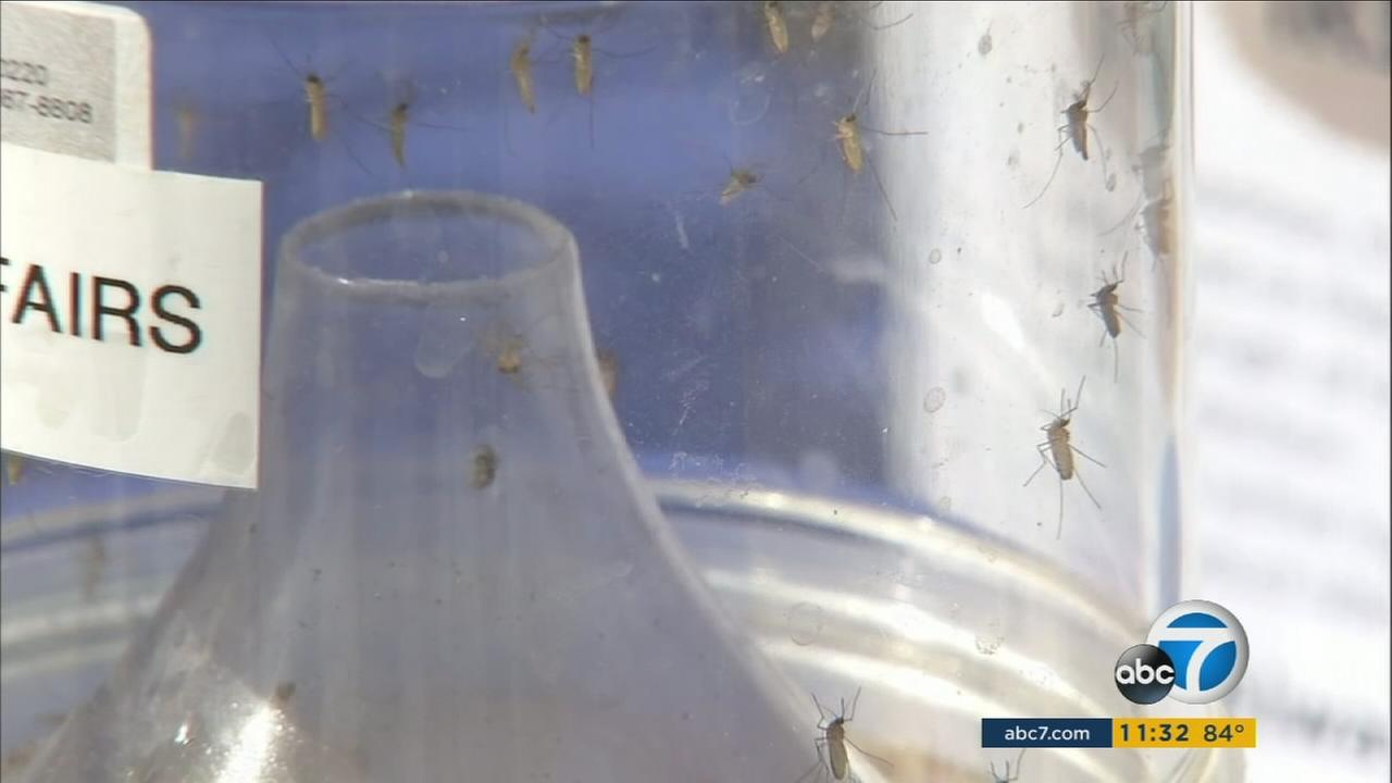 LA officials spread awareness of the risks with mosquito born diseases