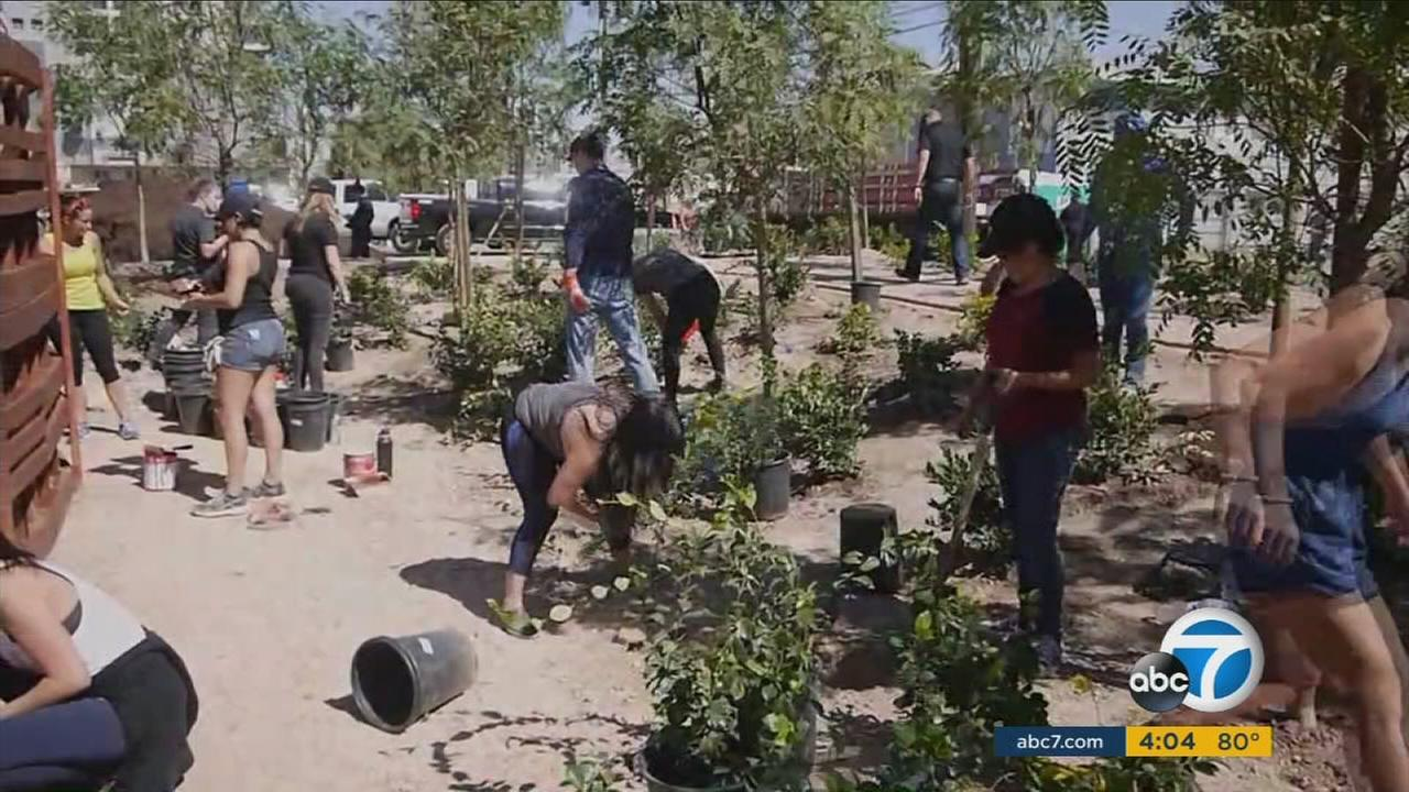 Volunteers and community members work on the healing garden in Las Vegas days after a massacre that left at least 58 people dead and more than 400 injured.