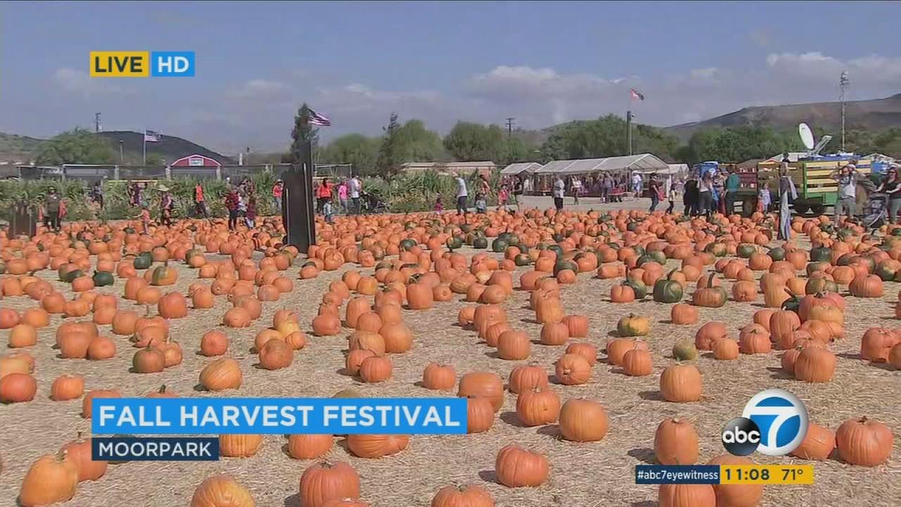 Underwood Family Farm hosts families and children at their annual fall festival