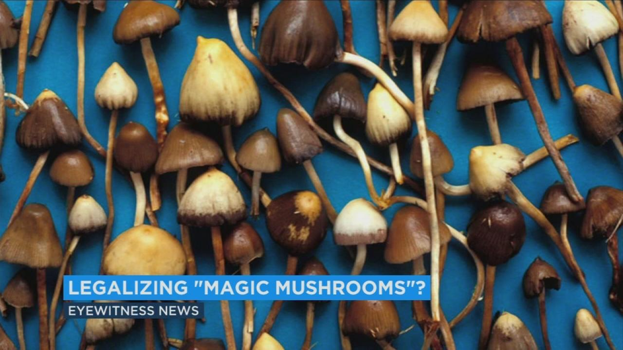 After the legalization of marijuana in California, magic mushrooms are moving toward the same status.