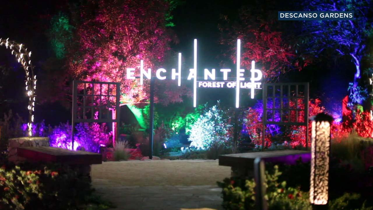The Enchanted: Forest of Light display at the Descanso Gardens is seen in La Canada Flintridge.