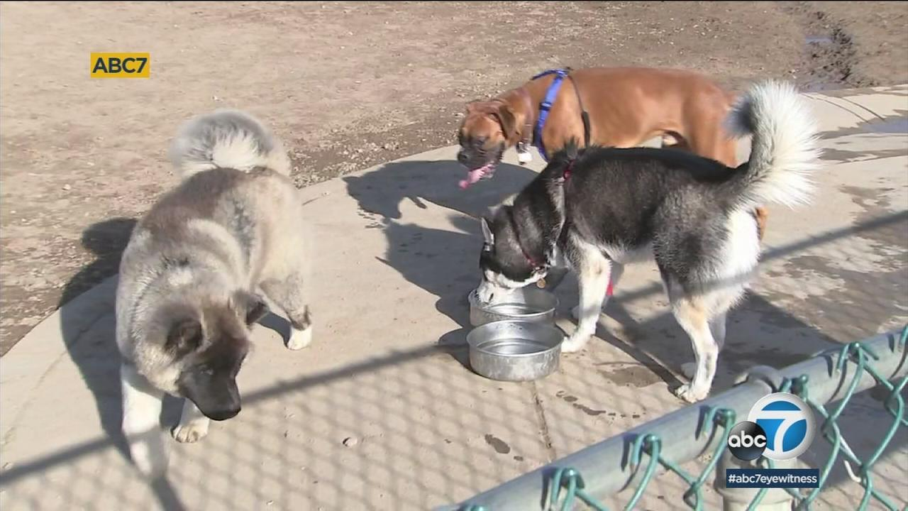 A warning for dog owners -- theres been a rise in the distemper virus in the South Bay, and it could be deadly to unvaccinated dogs.