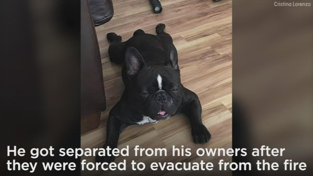 A Sylmar fire captains dog went missing amid evacuations as the Creek Fire in the Sunland-Tujunga and Sylmar areas scorched more than 11,000 acres Wednesday.