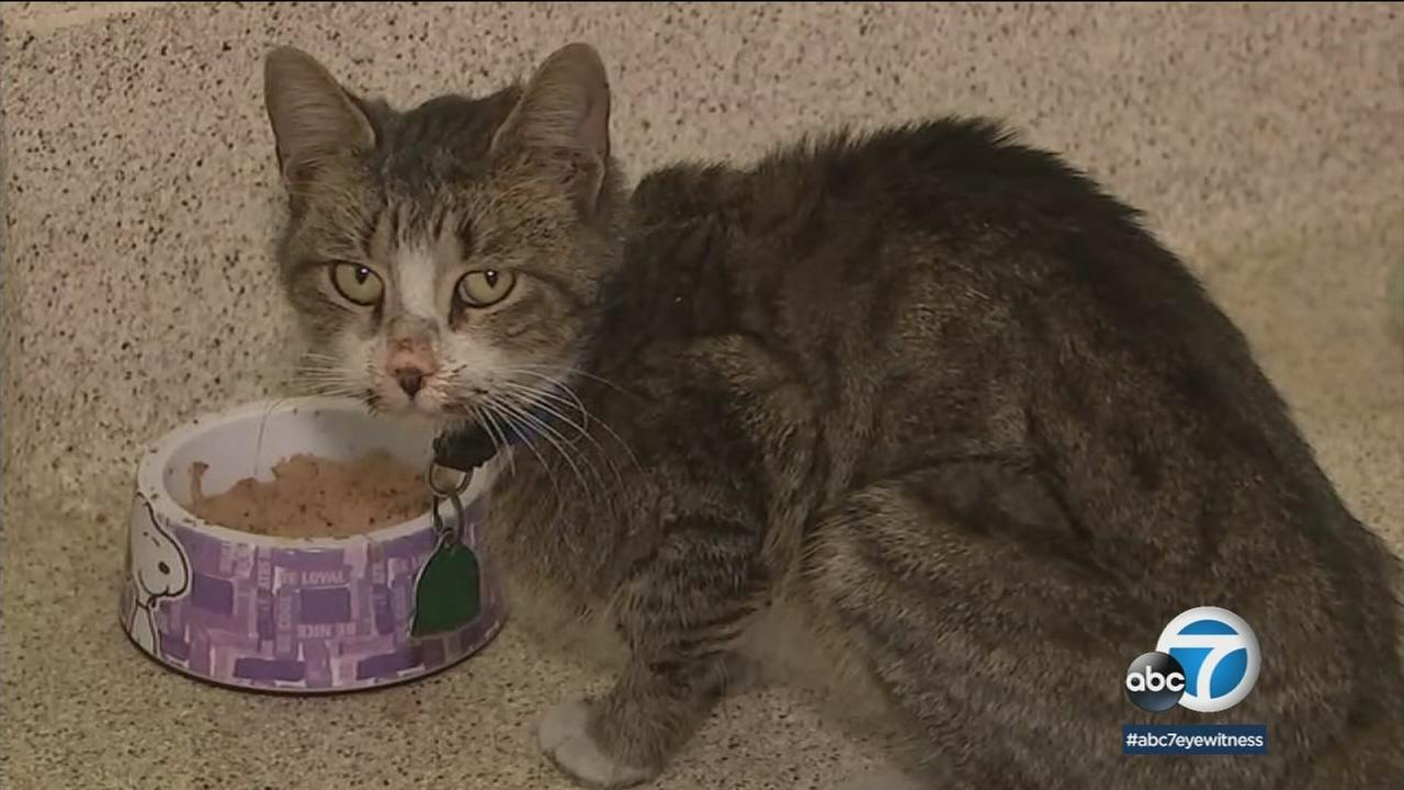 A cat that went missing from its Georgia home is recovering and will be returned to its family -- after it was discovered in a Pepsi truck in the Inland Empire.
