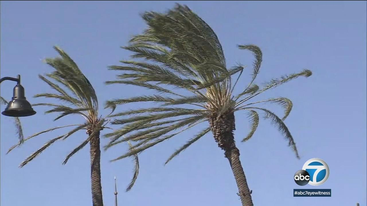 Palm trees are moved by strong winds in Simi Valley on Sunday, Dec. 17, 2017.