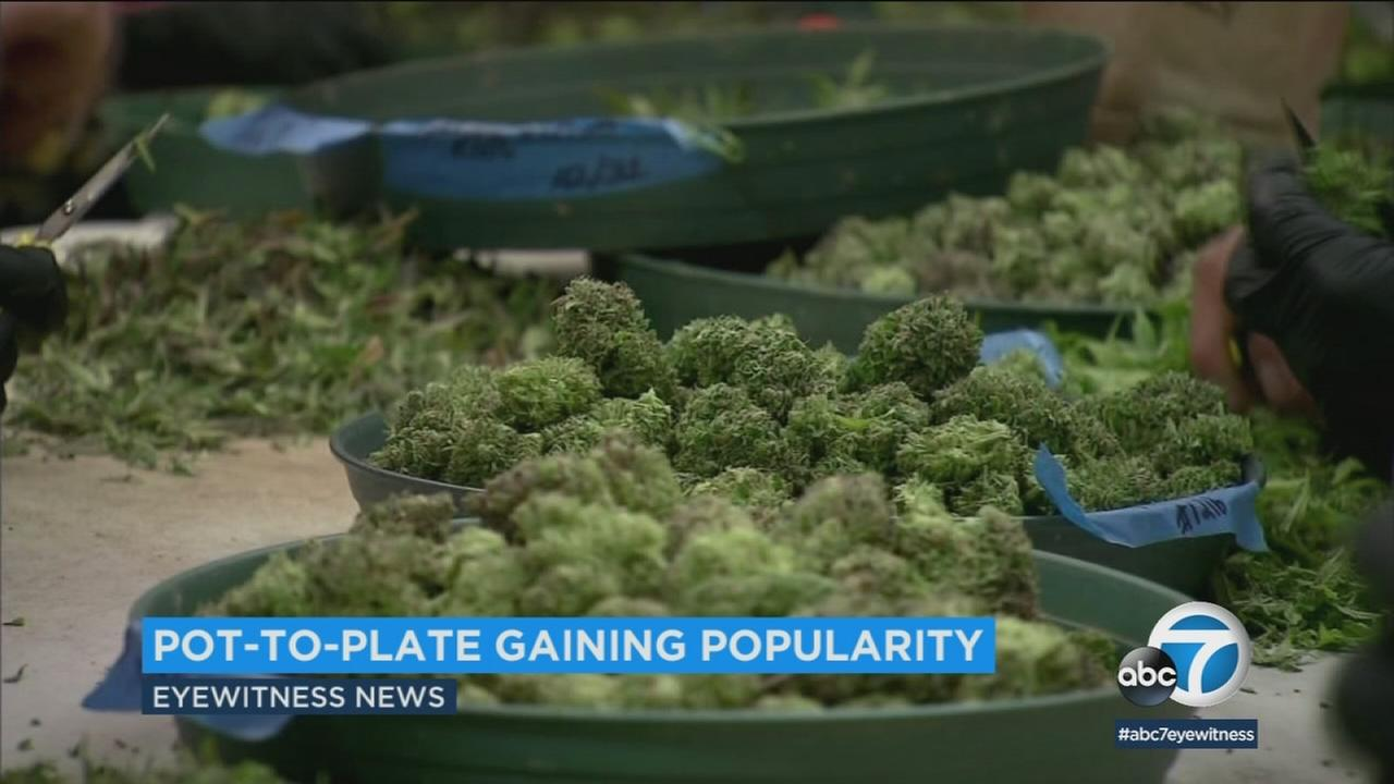 With marijuana becoming legal in California on Jan. 1, chefs and restaurants are looking at new ways to team pot with culinary dishes.
