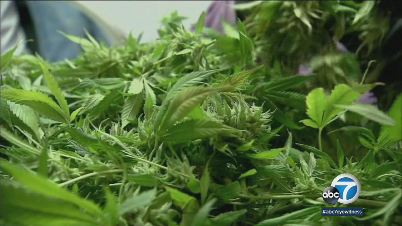 Recreational marijuana becomes legal in California on Jan. 1, but some SoCal cities are not allowing dispensaries to operate.