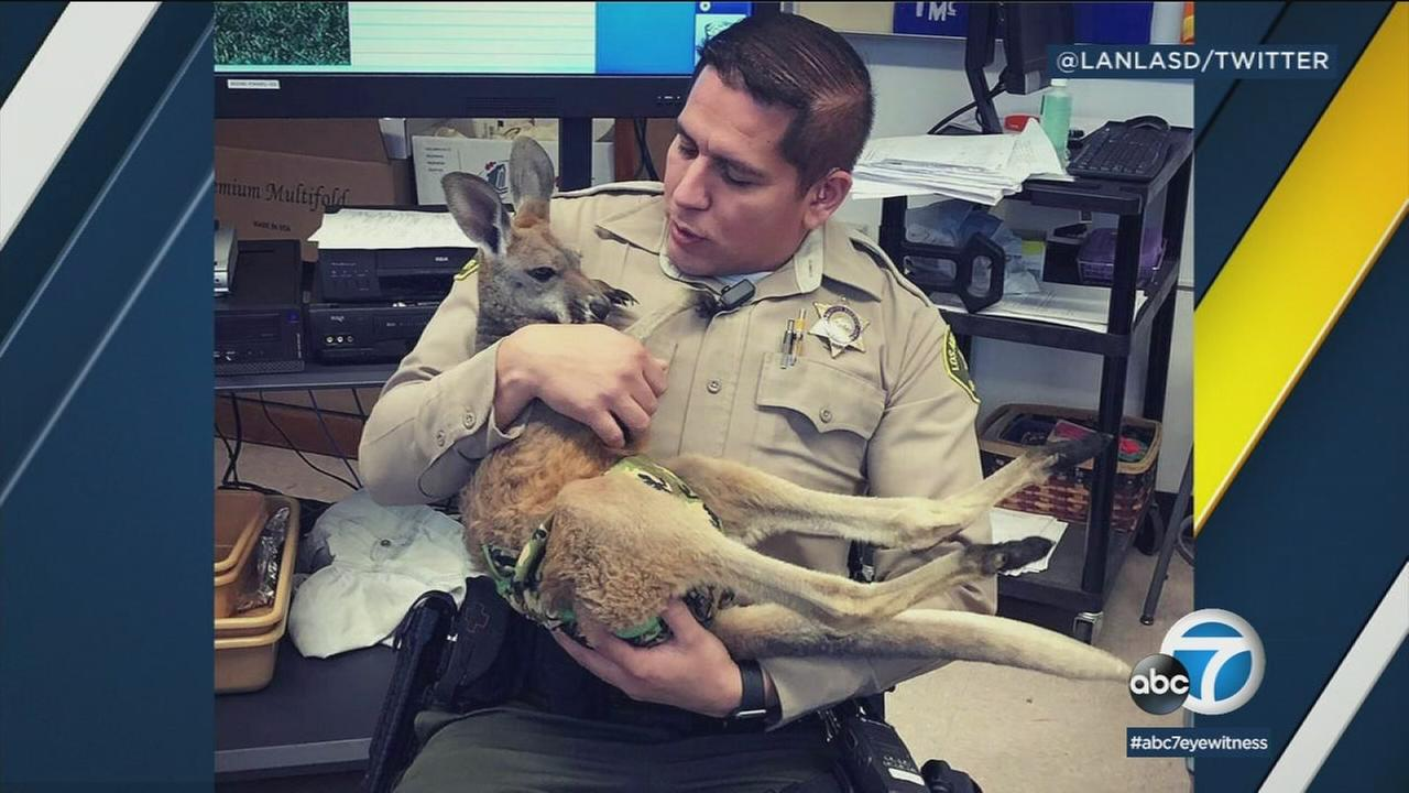 An LASD deputy embraces an acting kangaroo during its school visit in Lancaster on Friday, Jan. 12, 2018.