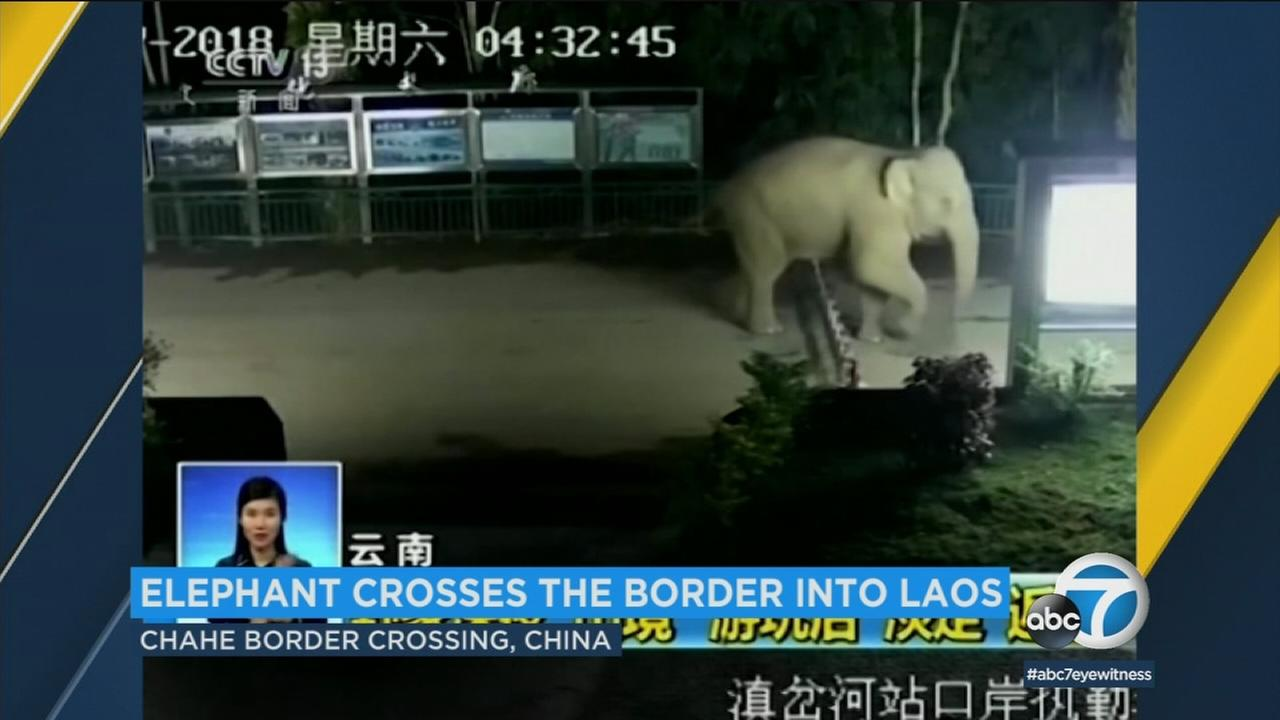 This wild elephant isnt very concerned with border checkpoints.