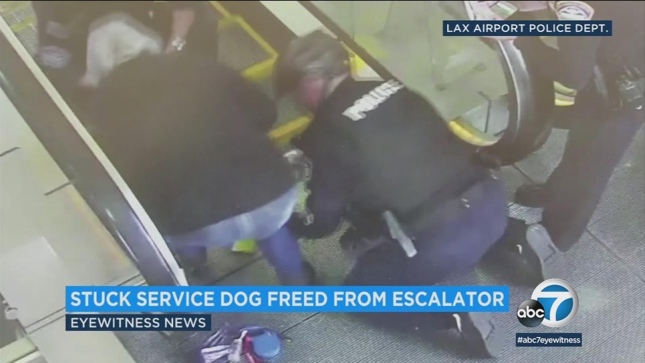 021418-kabc-5am-lax-escalator-dog-vid
