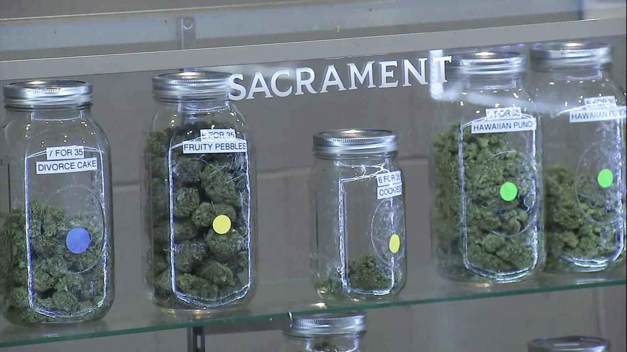 Marijuana displayed in jars at Church of Hundred Harmonies in La Puente on Thursday, March 8, 2018.