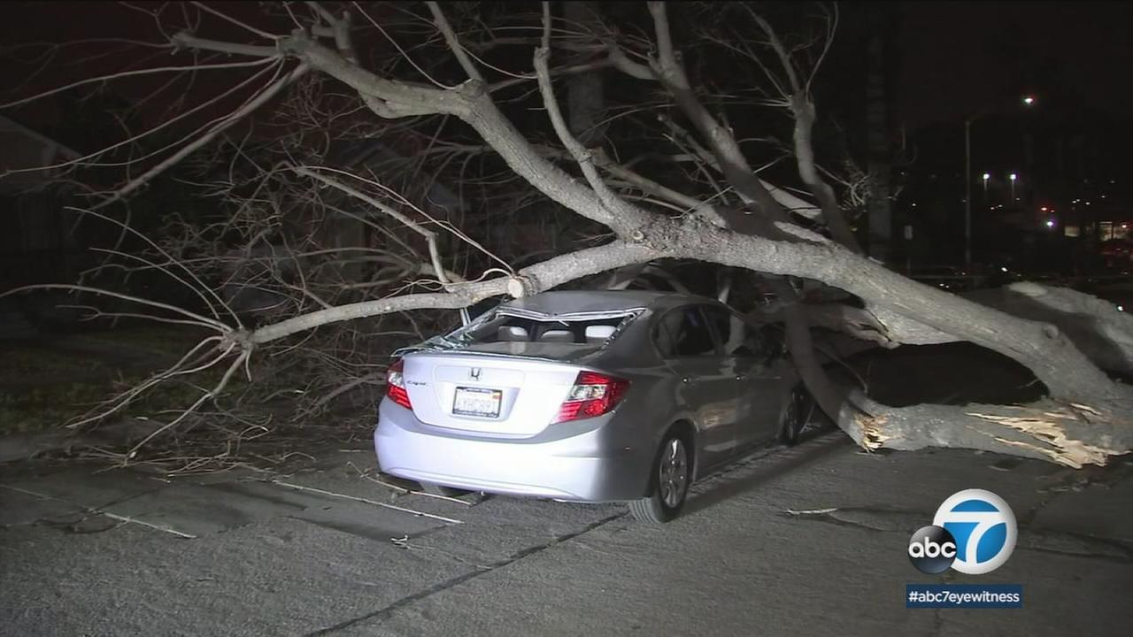 A damaged car is shown with a large tree on top of it after winds brought it down in Cypress Park on Thursday, April 12, 2018.