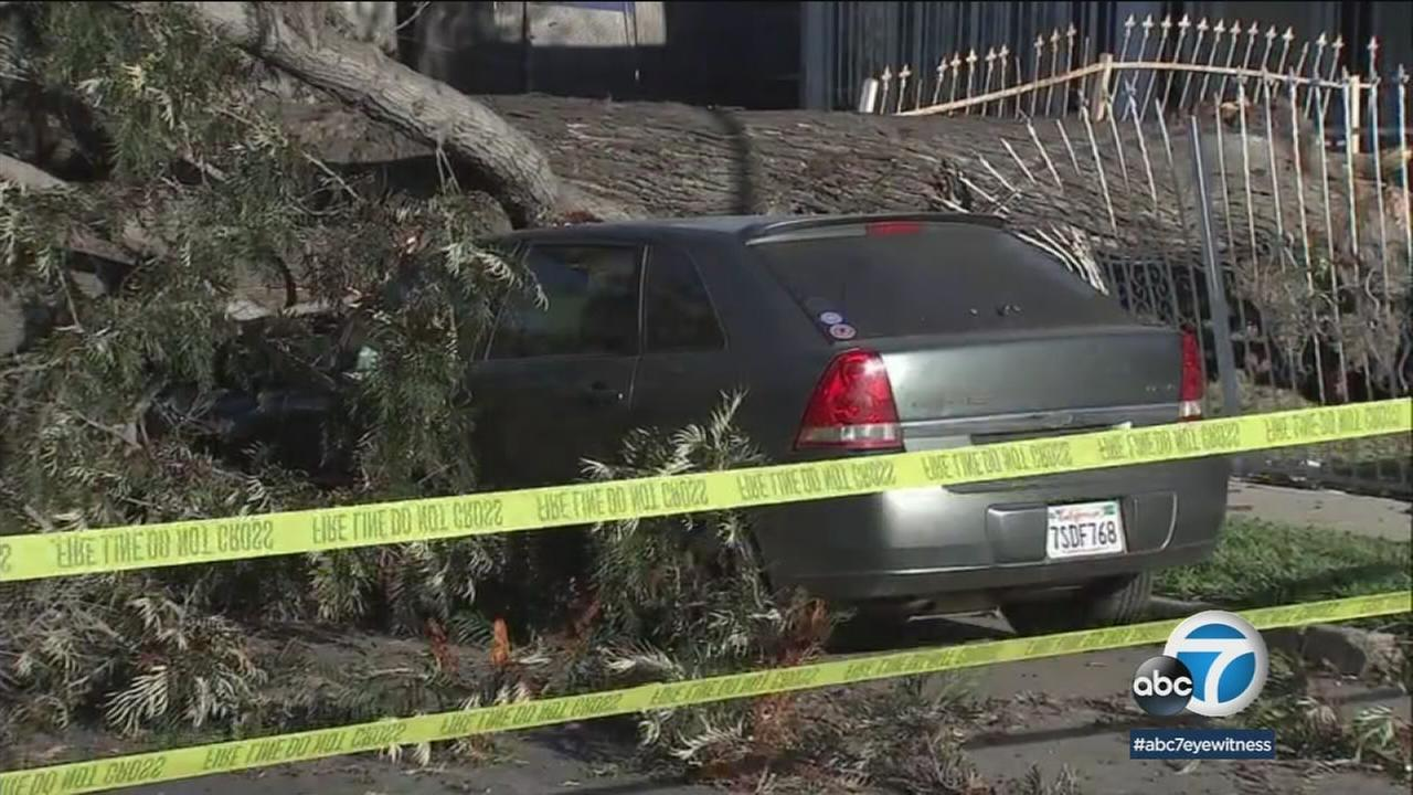 A major South Los Angeles Street was impassable on Tuesday after a large tree collapsed on top of several cars during strong wind gusts the night before.
