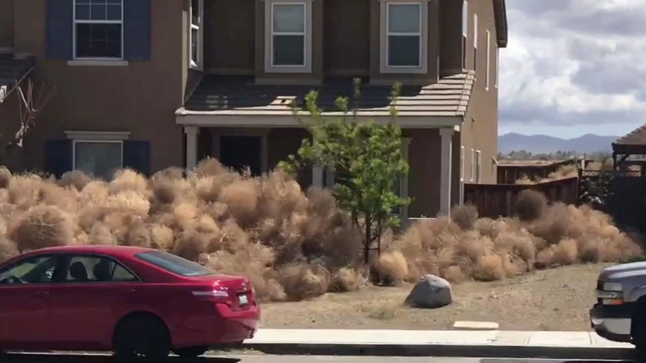 Tumbleweeds pile up on a Victorville property.