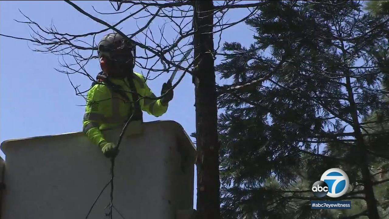 Crews work to remove dead trees and branches as a way to prevent wildfires in Southern California.
