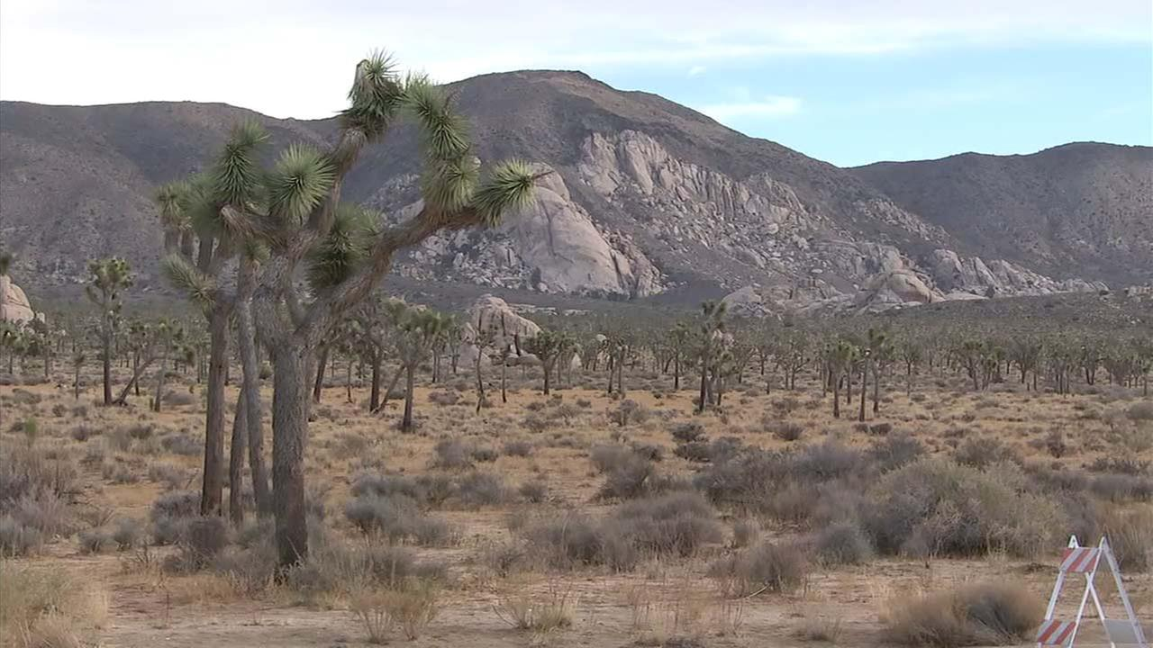 Joshua Tree National Park is seen in an undated file photo.