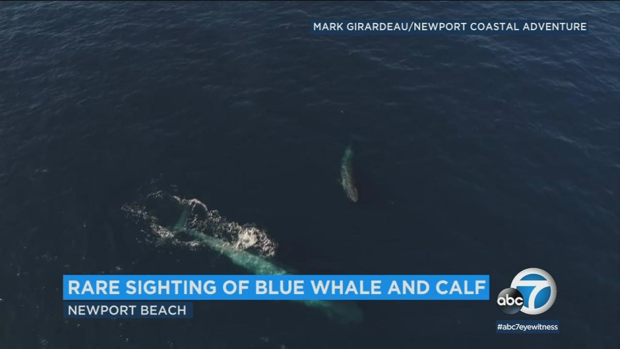 There was a rare sighting of a blue whale with her calf right off the Southern California coastline over the weekend.