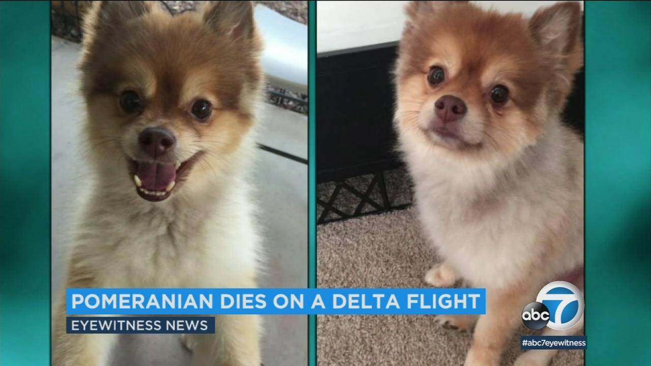 His Pomeranian was found dead during a layover on a Delta flight, and the dogs owner still doesnt know how he died.