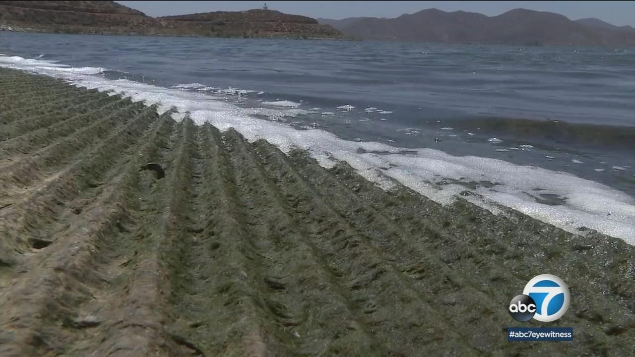 An algae bloom in Diamond Valley Lake is shown.