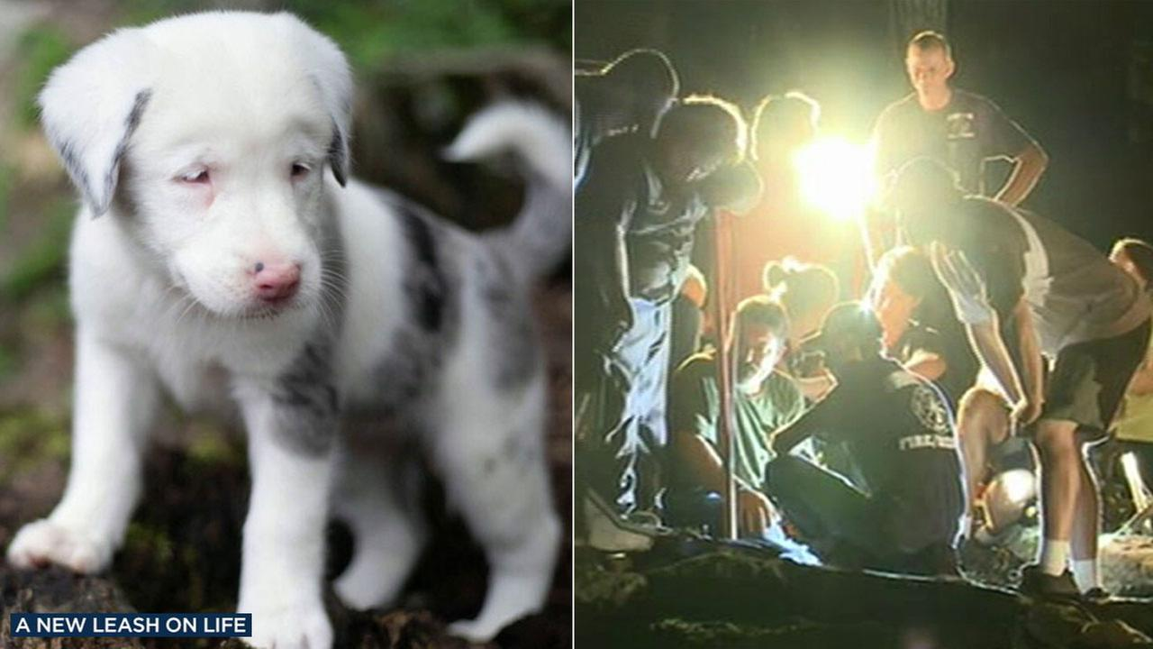 After 30 hours of effort, volunteers were able to rescue a 7-week-old deaf puppy that fell down a 50-foot (15-meter) crevice behind a house in Alabama.