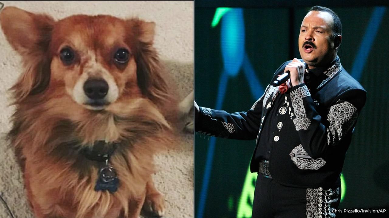 A dog owned by Pepe Aguilar died at LAX on Friday, the Latin music star confirmed in a tweet.