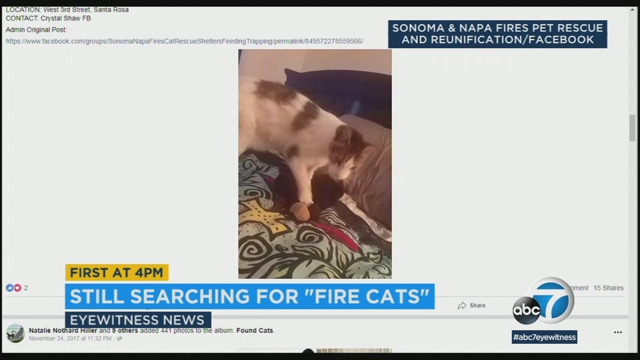 Volunteers have reunited about 300 cats lost in last years wine country wildfires with their owners, and are still looking to reunite more.