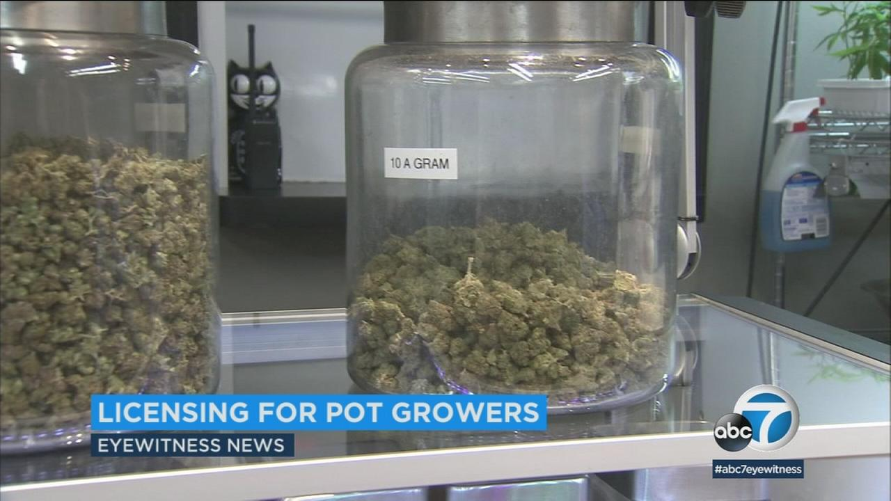 The city of Los Angeles is working on a licensing process to allow marijuana cultivators to operate legally in the city.