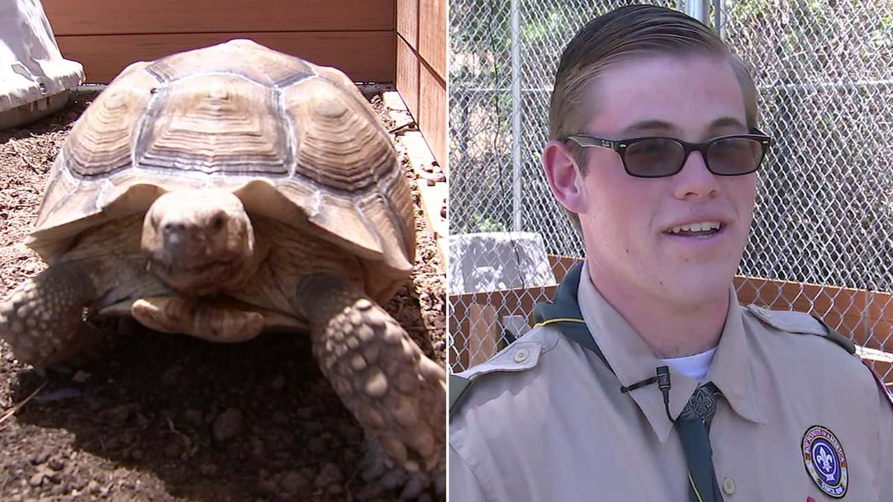 Ben Voth, 17, of Woodland Hills raised donations to build outdoor enclosures for turtles at the he Agoura Animal Care Center as part of his Eagle Scout project.