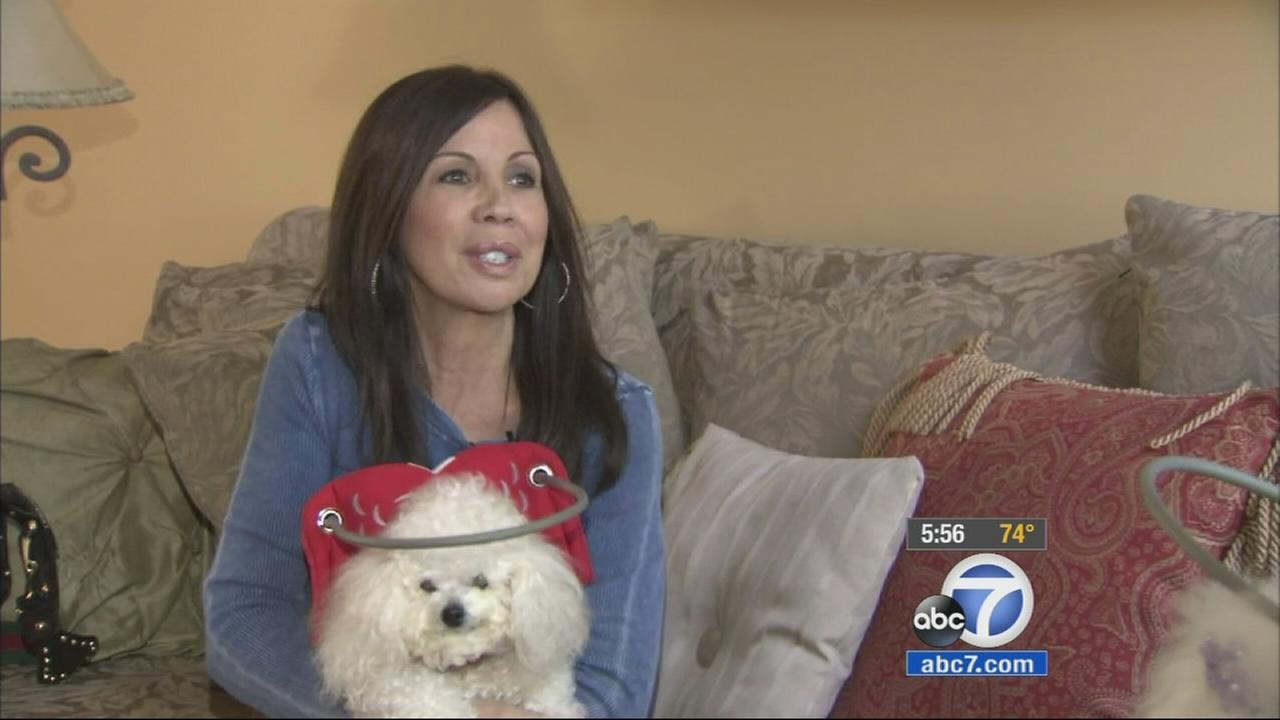 Silvie Bordeaux created Muffins Halo to help blind dogs.