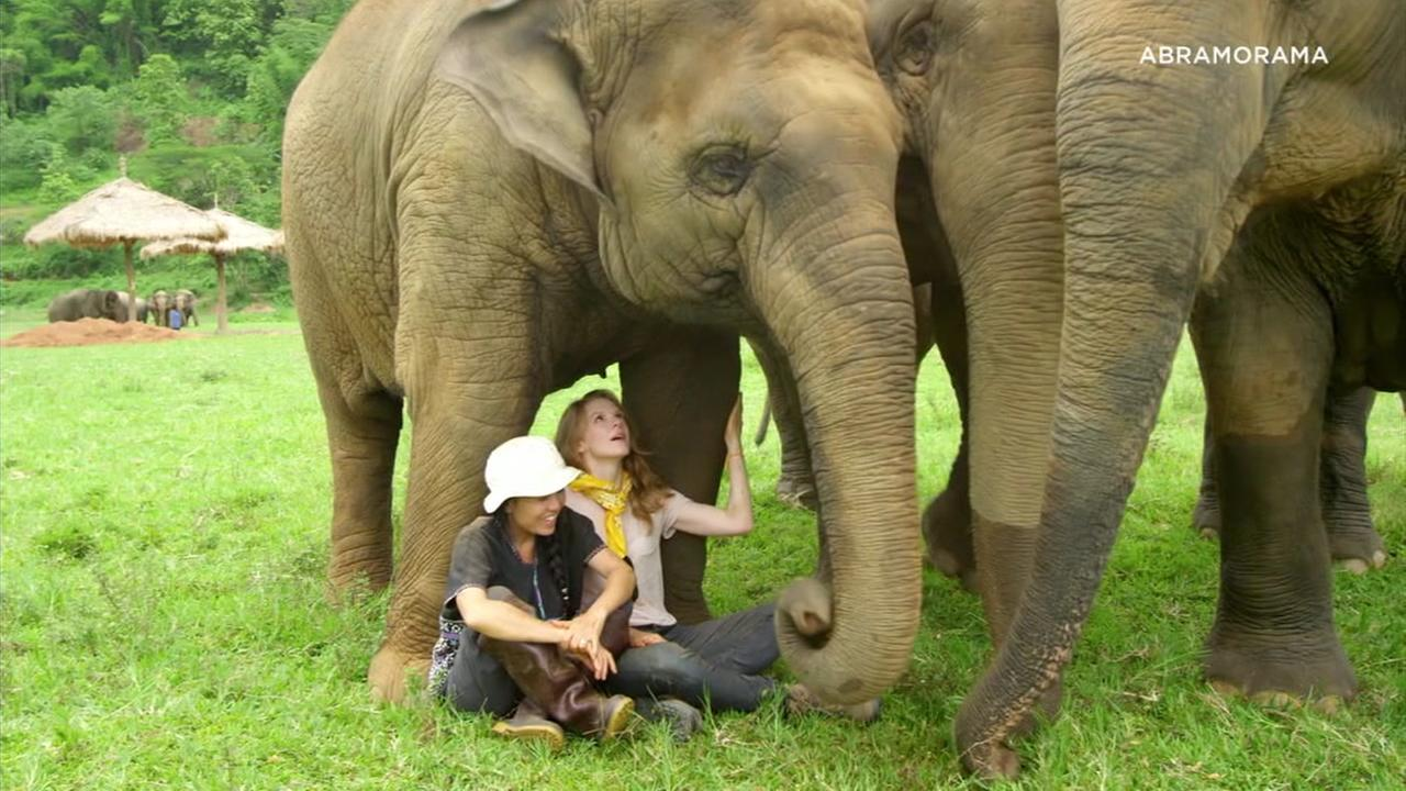 Ashley Bells documentary, Love and Bananas, takes us on a journey to Thailand, exposing the difficult fate of elephants there.