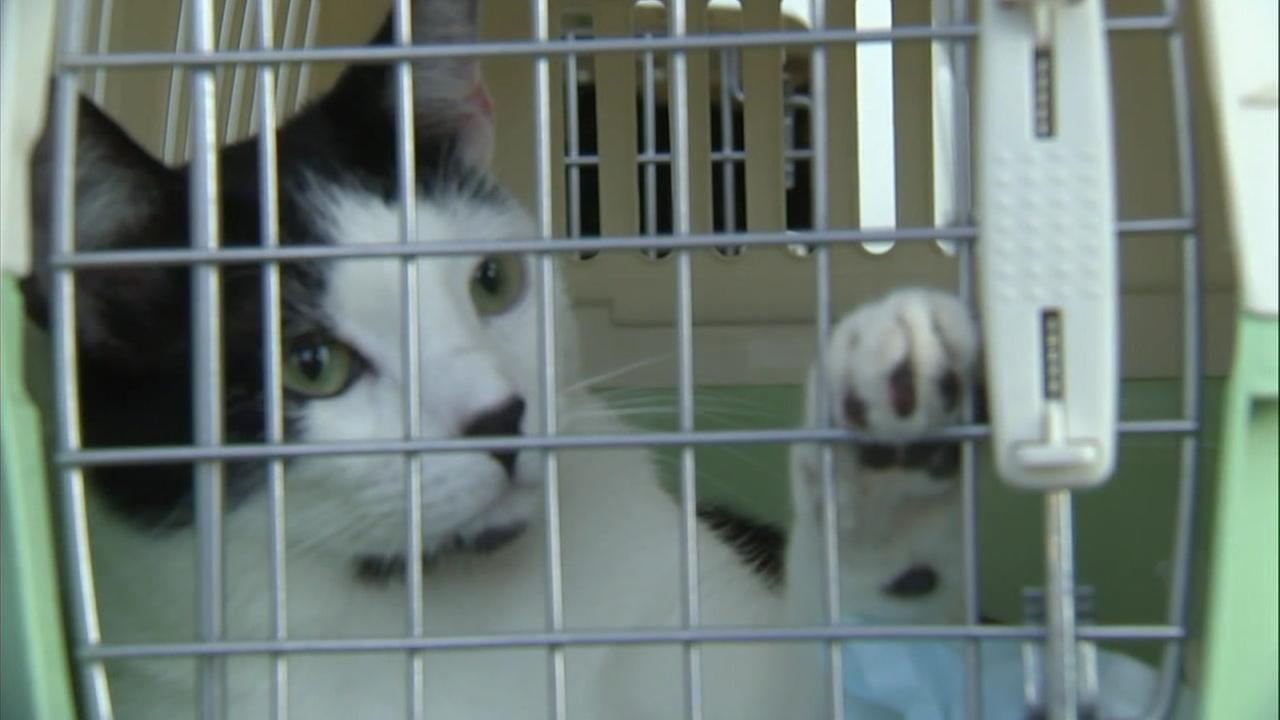 A cute shelter cat moves around in its crate as it gets ready to be shipped off to Seattle to find its forever home.