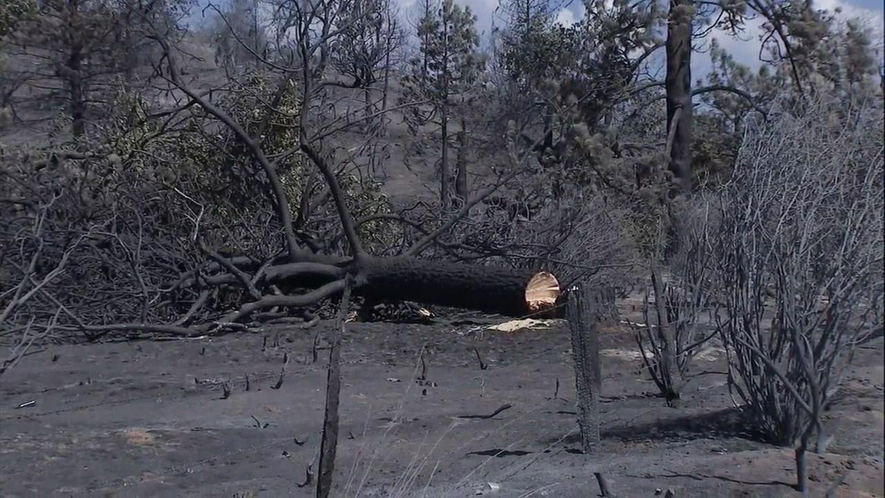 Charred trees and brush are left in an area of Idyllwild after the 13,000-acre Cranston Fire burned for several days.