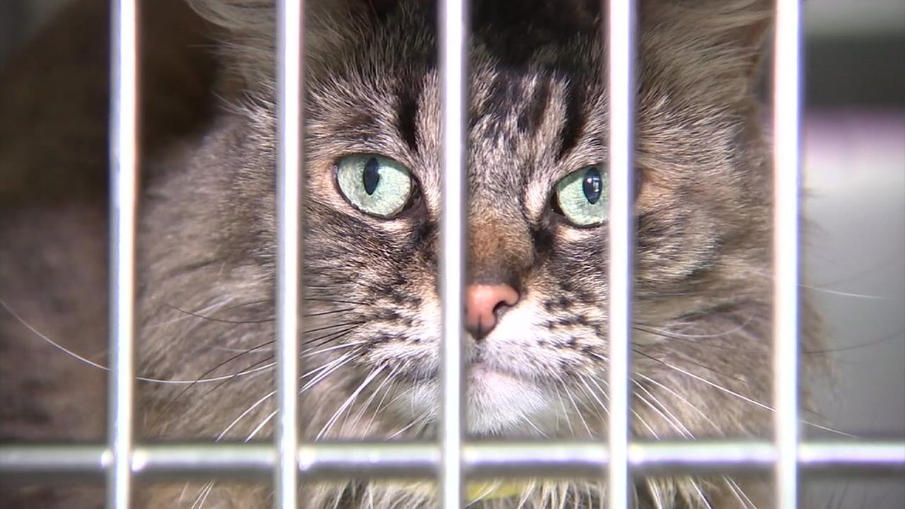 Local animal shelters are facing a crisis over cats.