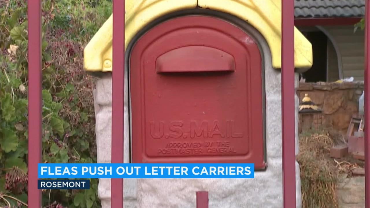 A mailbox is shown in a Sacramento-area neighborhood.