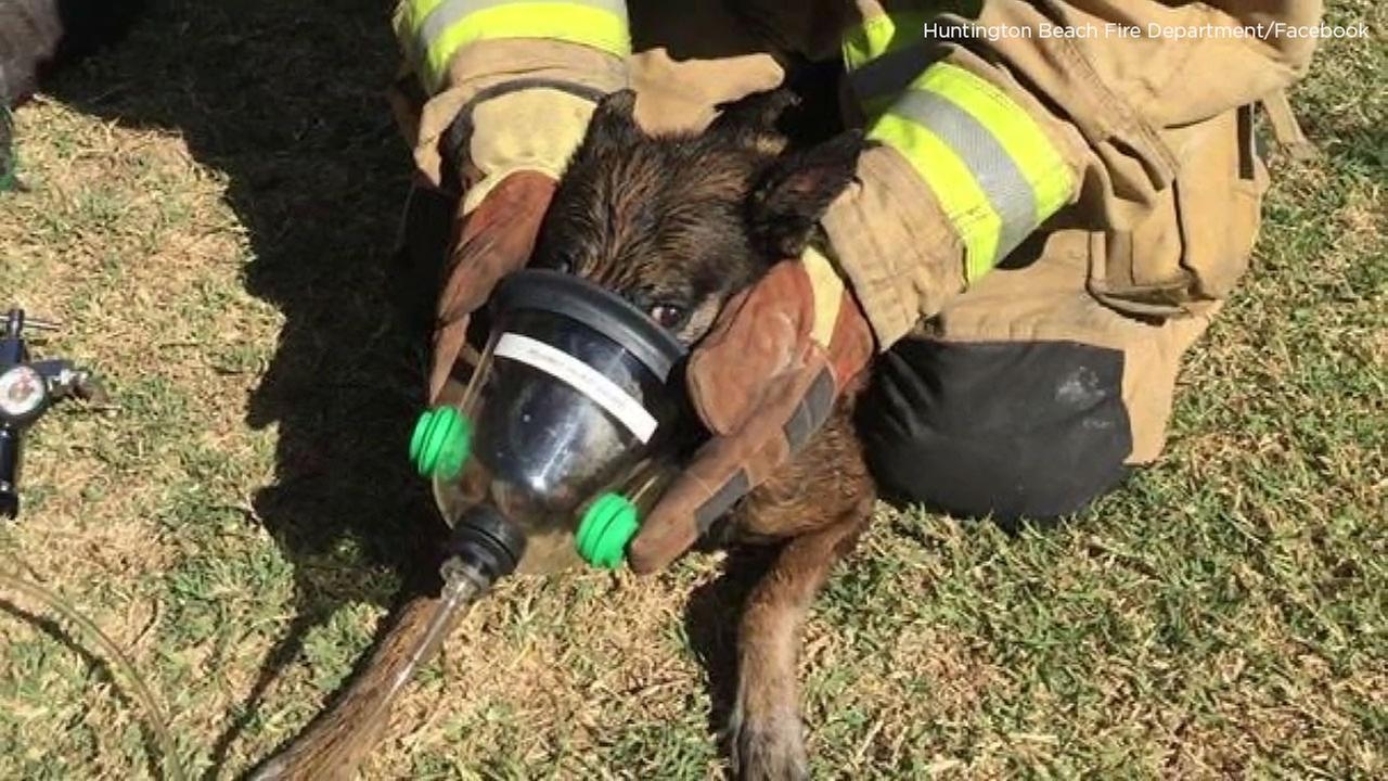 Firefighters provide CPR to a dog saved from a house fire in Huntington Beach on Wednesday, Aug. 22, 2018.