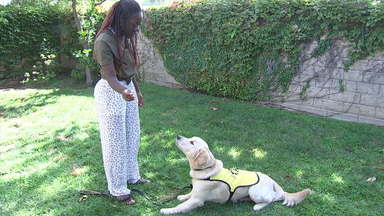 It takes a lot of commitment and patience to volunteer to train a guide dog, and this weeks ABC7 Cool Kid Bekah Brooks has a lot of both.