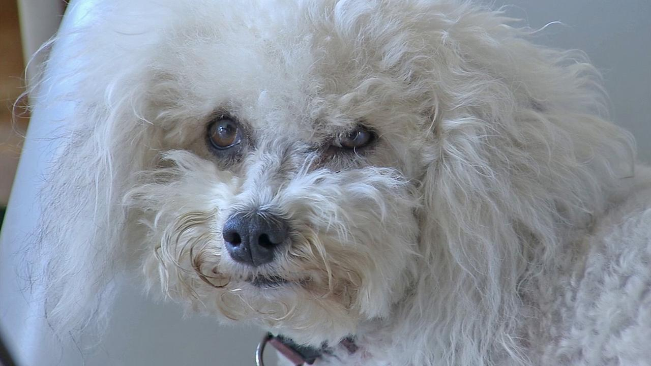 Bella the dog is seen in this photo from Nov. 26, 2014. She saved her owners life when he had a stroke.