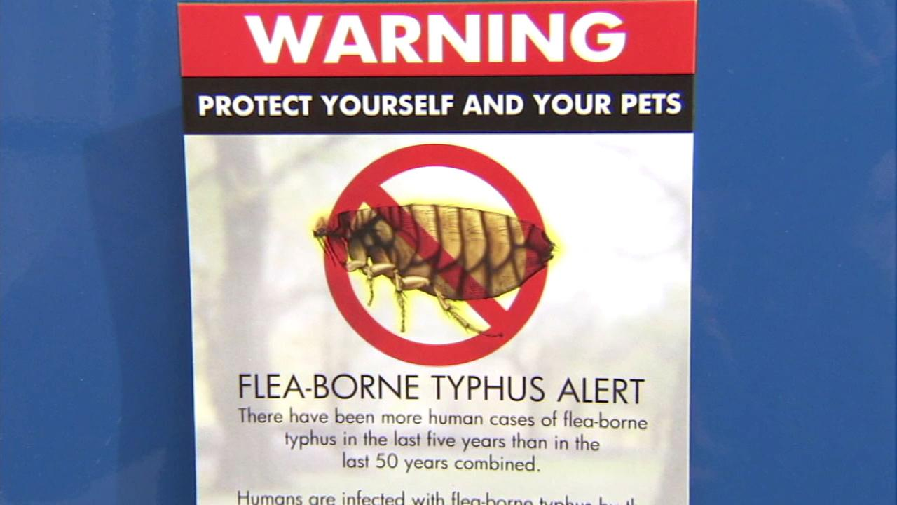 A sign warns about a flea-borne typhus.