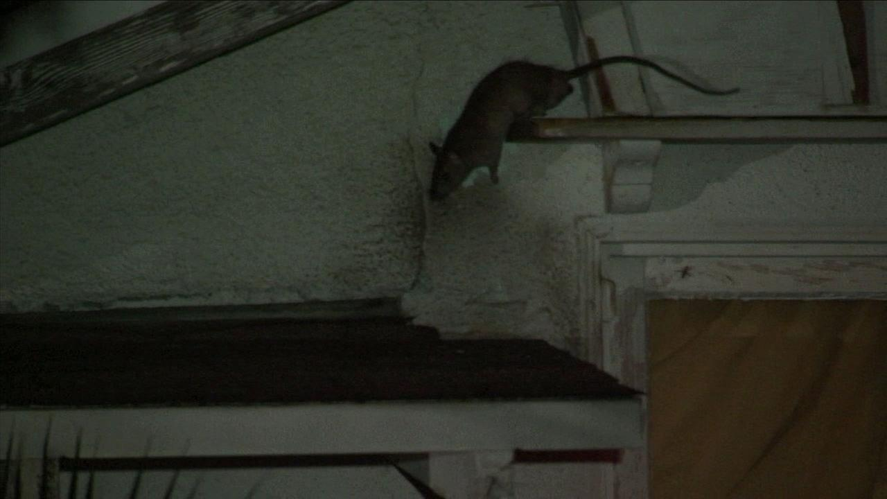 A rat is shown live as it crawls on the roof of a home in Van Nuys.